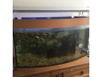 Large wooden fish tank