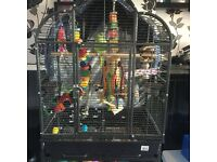 Ring neck parrot with cage toys