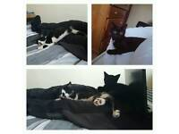 Two kittens all injections loving home only great with other animals