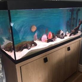 Fluval fish tank 240 litres