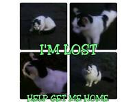 CAT FOUND HESSLE