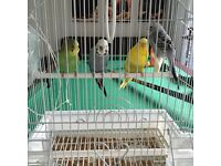 Bonded Pair + Cage + All Food