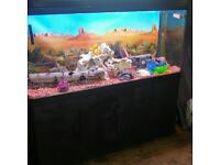 5 FT CURVED FISHTANK WITH MATCHING BLACK CABINET IN EXCELLENT CONDITION