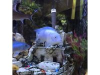 African Cichlids - various sizes, colours available (pleco's catfish and more also available)