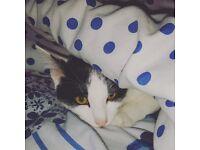 Free Kitten (Accessories £40)