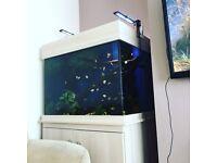 Clearseal aquarium 3x2x2 ft