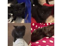 3 gorgeous kittens for sale. *all reserved will be in contact soon*