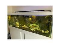 Malawi fish and fish tank