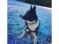 Dog walker available- Dean Park area