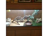4ft x 2ft vivarium (full set up)