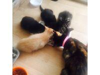 Small kitten for sel