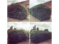 Evergreen Gardening - book your hedge cutting today