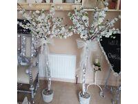 Last pair white cherry blossom tree's 4ft
