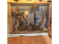 Taxidermy case of 12 birds and 1 red squirrel in a bamboo framed case