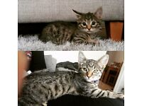 5 month old kitten, Skye