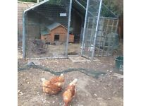 chicken house and large enclosure