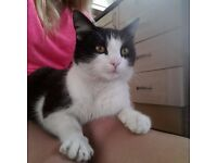 12 months old lovely cat looking for a new howe