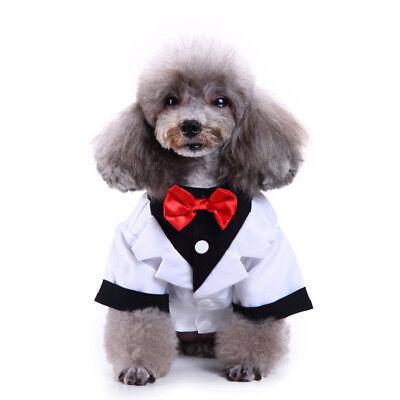 Small Medium Dog Hochzeitsanzug, Hunde Kleidung Kostüme für - Kostüm Für Chihuahuas
