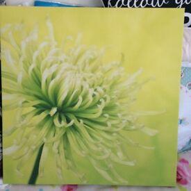next flower canvas