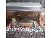 """fish tank with lid for sale includes extras ( h 10 inches w 18"""" d 10"""")"""