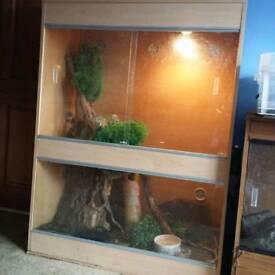 Tokay Gecko and bioactive viv