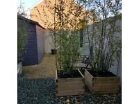 Pair of Planters with black bamboo