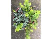 Mix succulent in terracotta pot