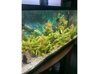 Various aquarium fish tank plants
