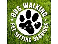 Dog Walker Needed in Greenwich