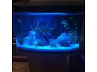 LOVE FISH PANORAMA TANK 64L /excellent condition