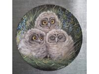 Wedgwood bone china, The Baby Owls By Dick Twinney