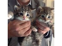 Two beautiful kittens