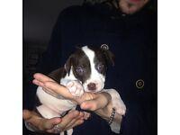 Girl staff puppy