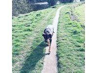 Animal sitting and dog walking