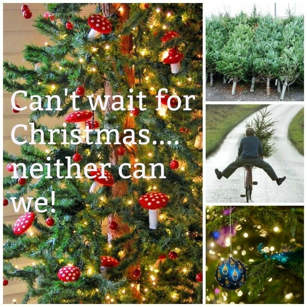 Christmas Decorations Gumtree Perth