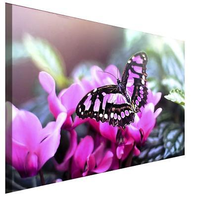 Rosa Schmetterling Blume Leinwandbild AKArt  BIlder Wanddeko Wandbild Kunstdruck ()