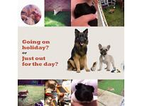 Pet sitting dog walking services