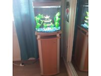 fish tank 50ltr and stand