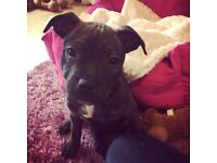 Beautiful puppy looking for her forever home