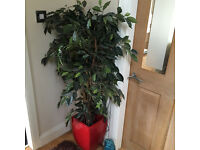 fake plant and pot