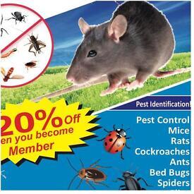Pest control Mice Bedbugs Rat Cockroaches Ants wasps Flies Fleas extermination