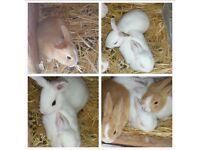 Baby rabbit. ..