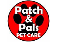 ****DOG WALKING & PET SITTING**** (North Down & Ards) Experienced, Professional, Insured, CRB check