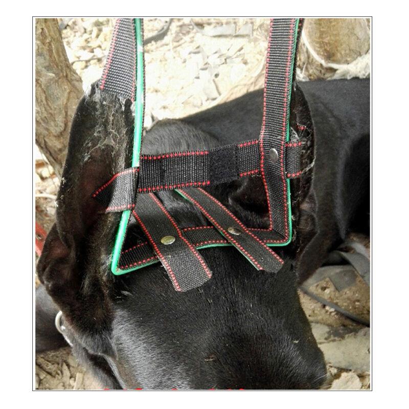 Pet Puppy Dog Ear Stand Up for Doberman Pinscher Dog Samoyed Great Dane XL