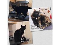 Forever home needed for beautiful cats