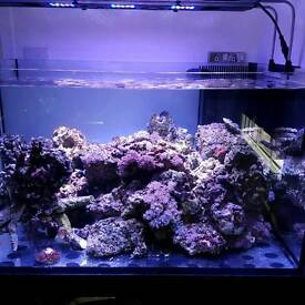 Mature live rock for marine aquarium