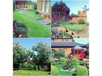 HEDGE TRIMMING/CUTTING! Garden maintenance.