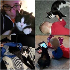 Missing kitten age 5 months