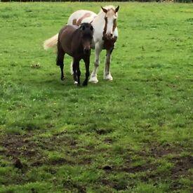 12.2 Pony for sale