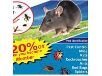 Pest control Mice rats bedbugs cockroaches wasps flies fleas mouse extermination
